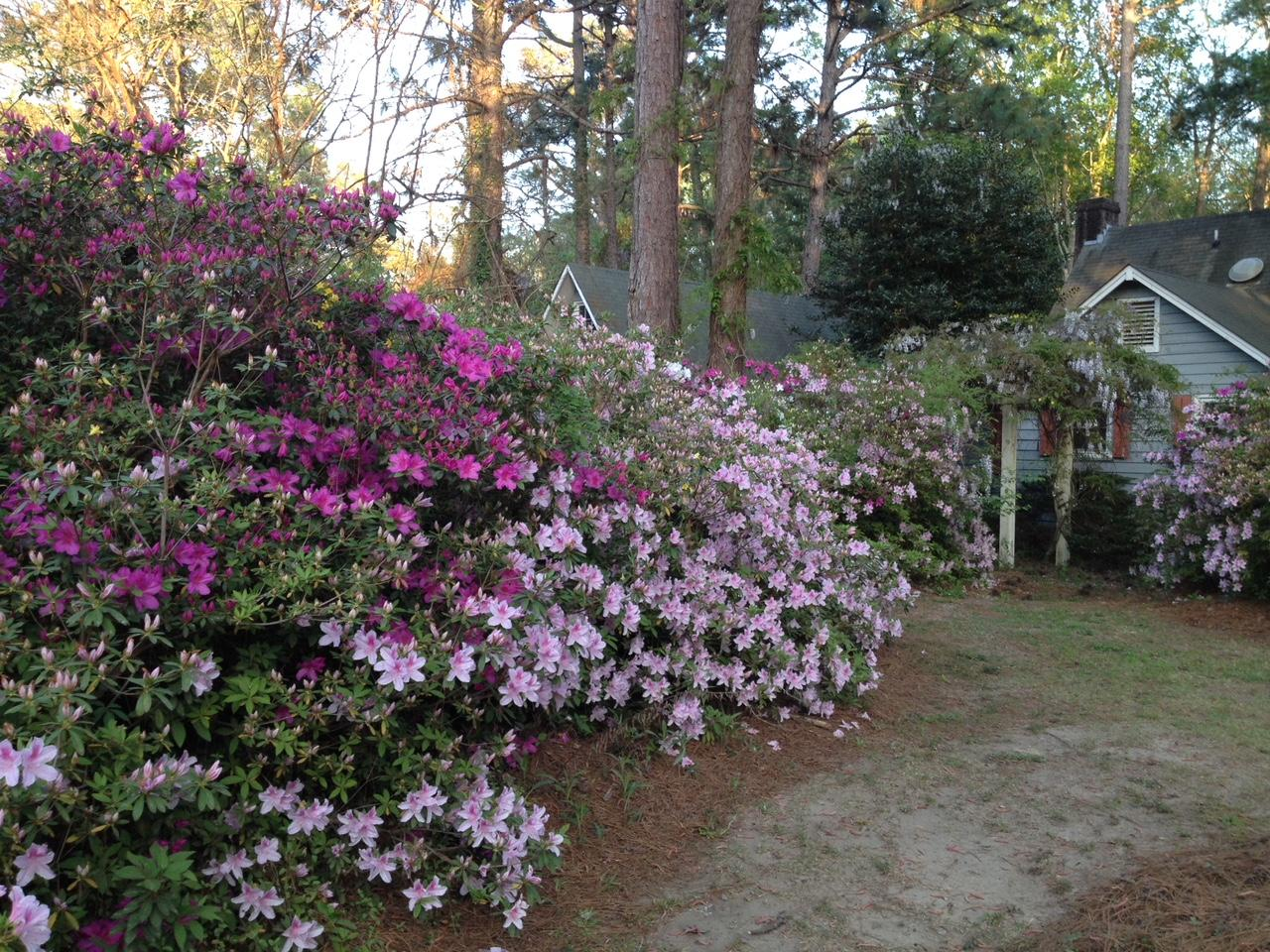 Silver Hill Homes For Sale - 830 Carolina, McClellanville, SC - 25