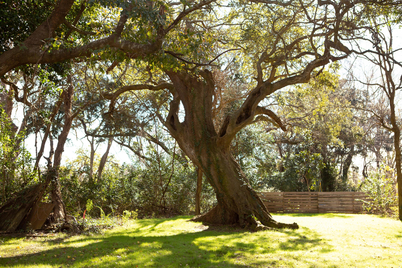 Magnolia Homes For Sale - 5 Paula, Charleston, SC - 22