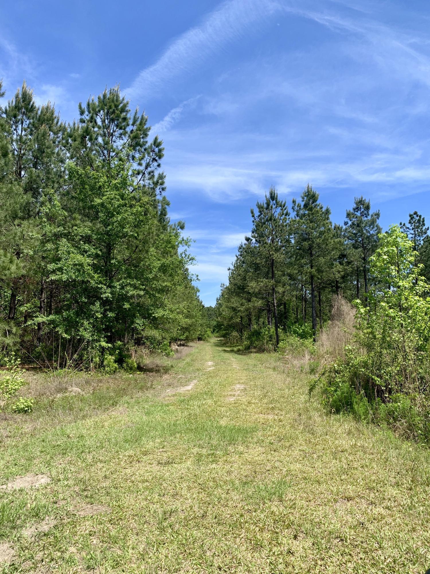 2717 Bells Highway, Walterboro, 29488, ,Vacant Land,For Sale,Bells,19013001