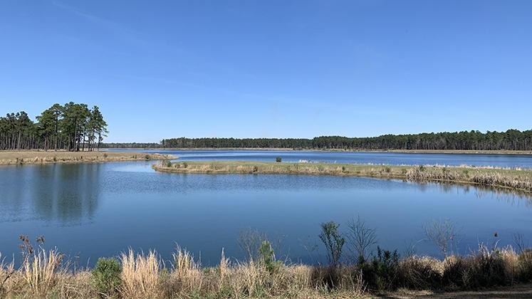 Cane Bay Plantation Homes For Sale - 121 Whaler, Summerville, SC - 24