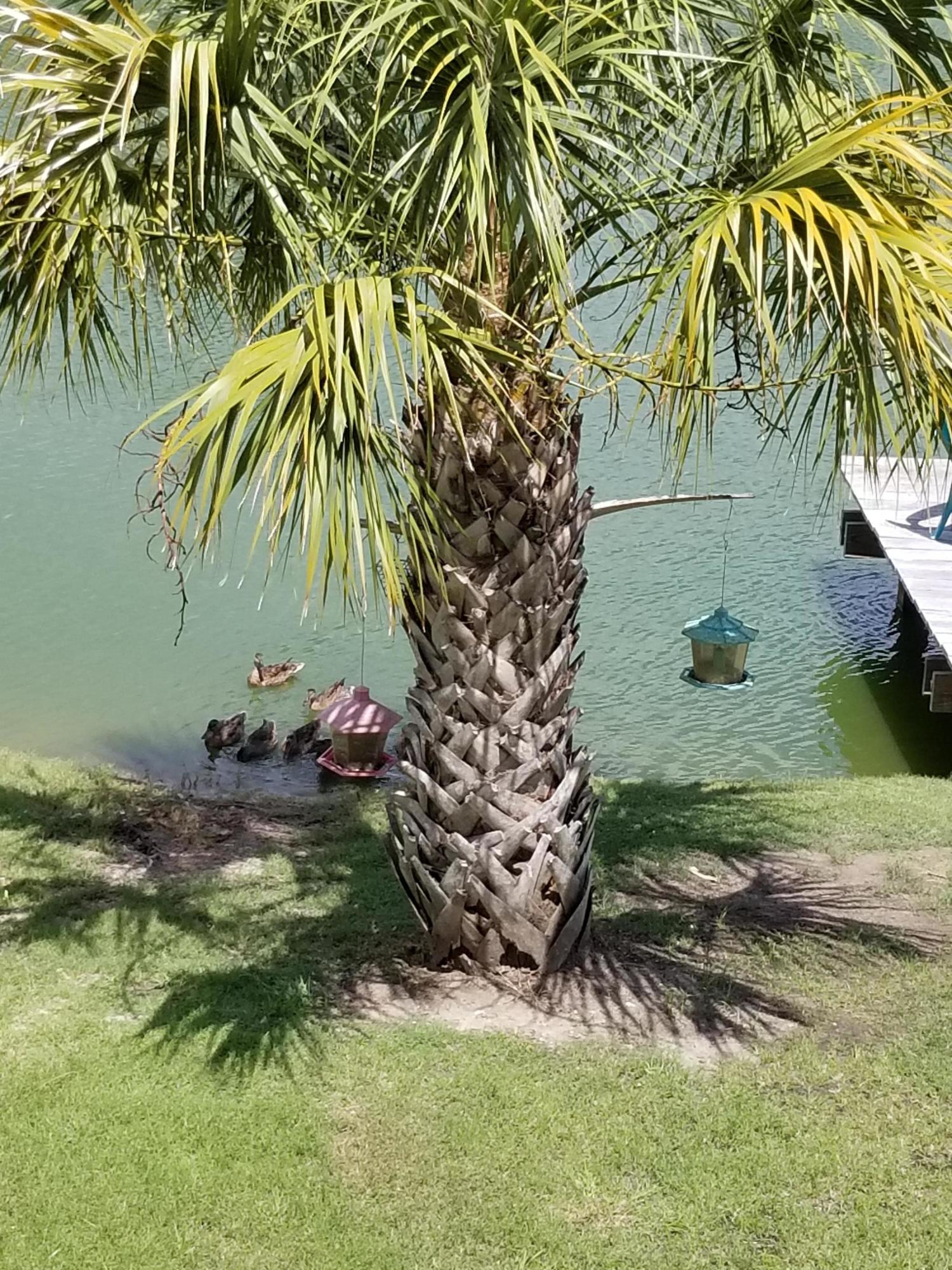Riverfront Homes For Sale - 1662 Wading Heron, Charleston, SC - 6