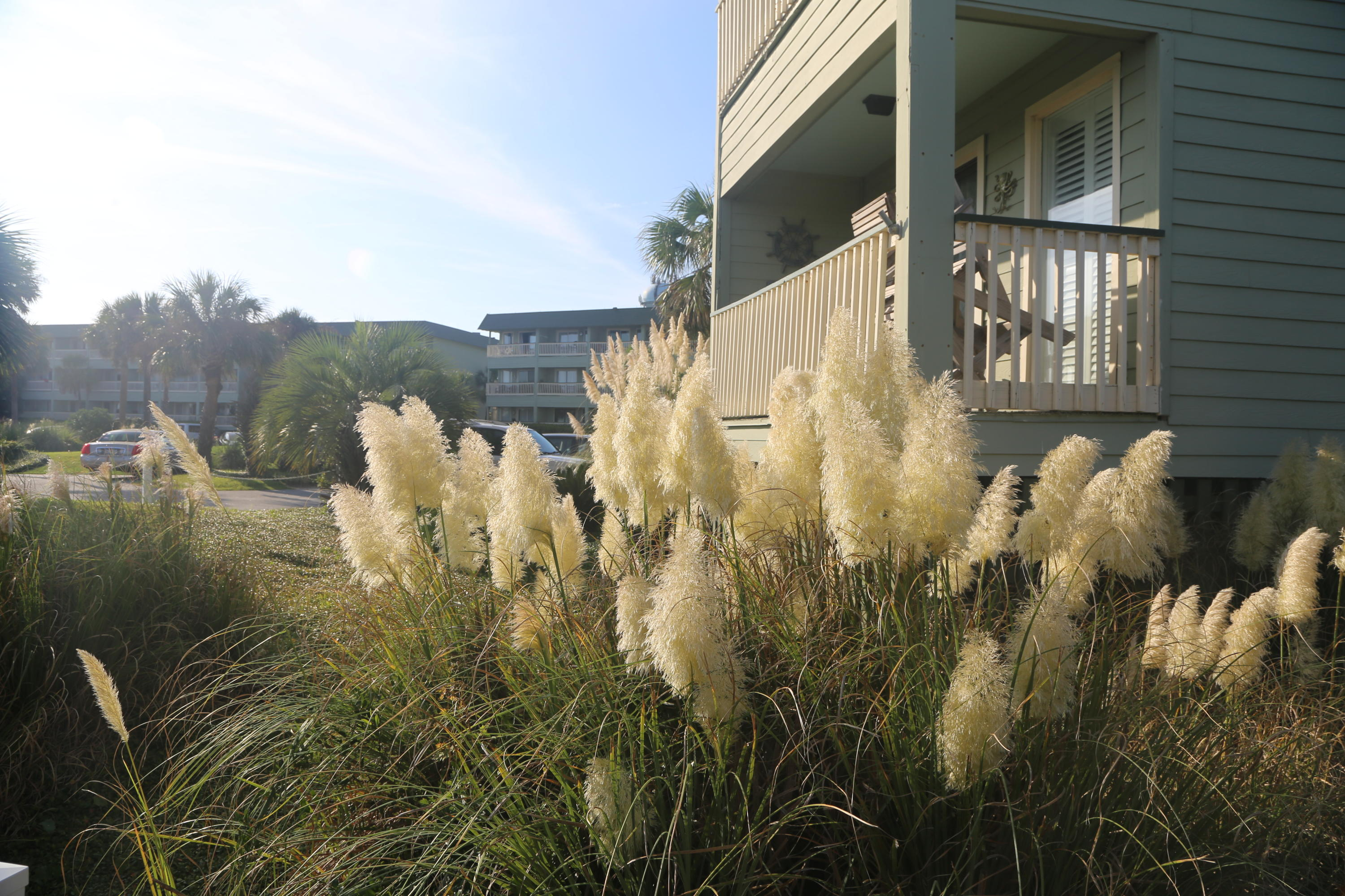 Sea Cabin On The Ocean Homes For Sale - 1300 Ocean, Isle of Palms, SC - 46