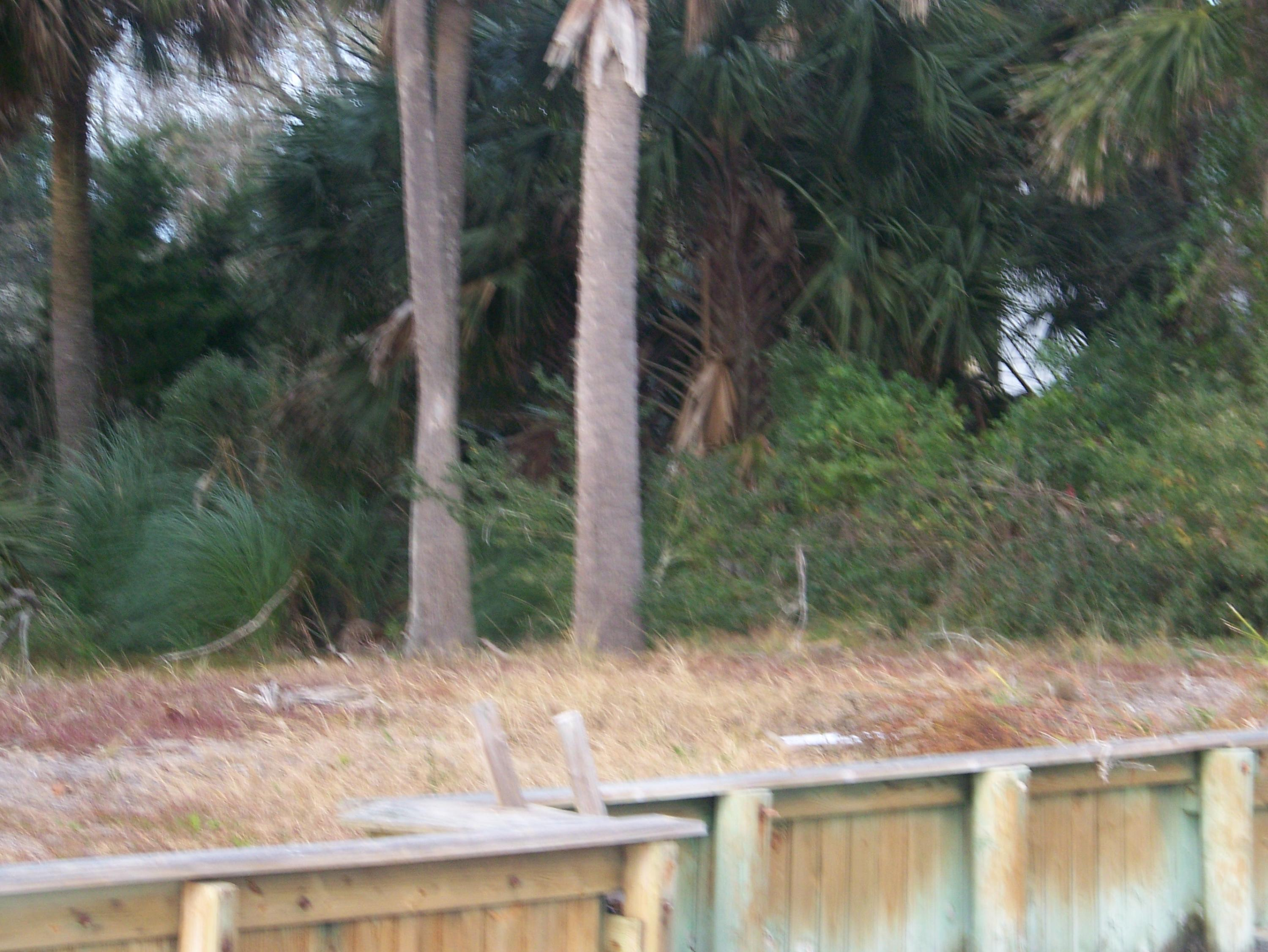 Jolly Rogers Estate Lots For Sale - 2615 Buccaneer, Isle of Palms, SC - 4