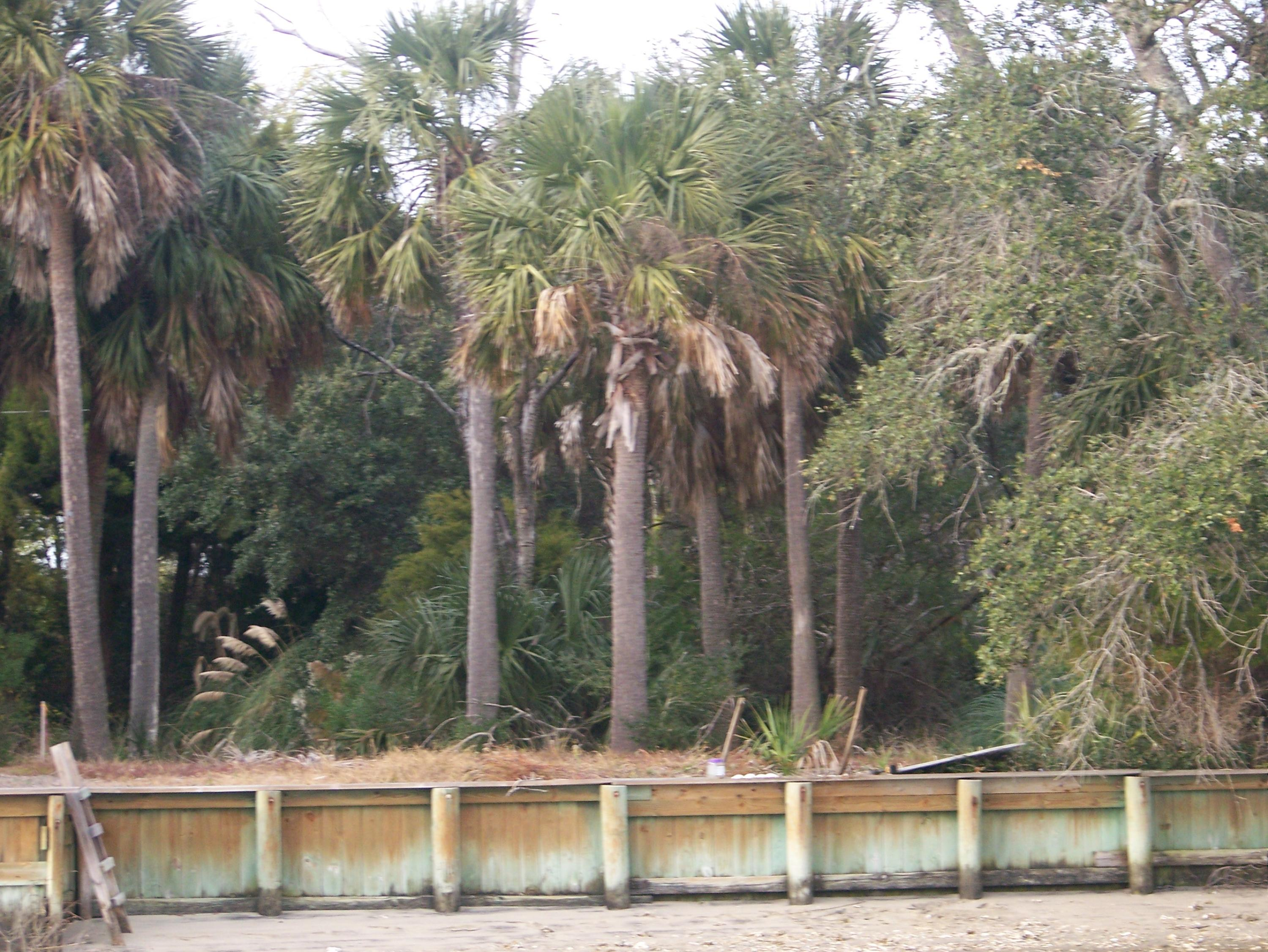 Jolly Rogers Estate Lots For Sale - 2615 Buccaneer, Isle of Palms, SC - 1