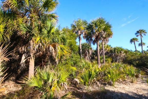 Dewees Island Lots For Sale - 291 Pelican Flight, Dewees Island, SC - 8