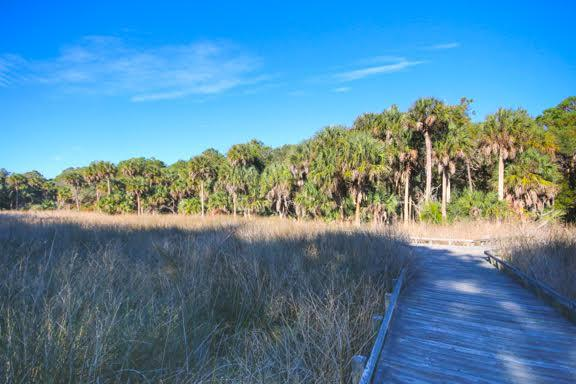 Dewees Island Lots For Sale - 291 Pelican Flight, Dewees Island, SC - 4