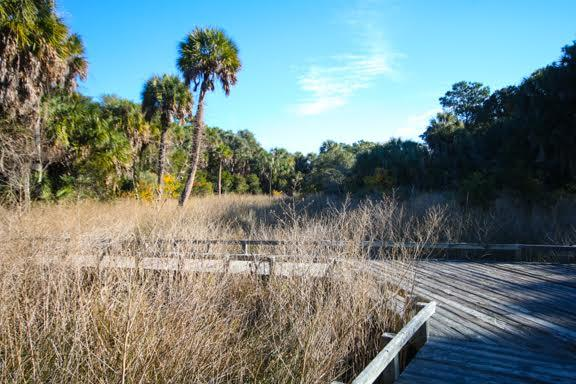 Dewees Island Lots For Sale - 291 Pelican Flight, Dewees Island, SC - 3