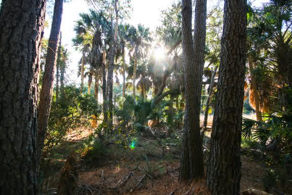 Dewees Island Lots For Sale - 291 Pelican Flight, Dewees Island, SC - 0