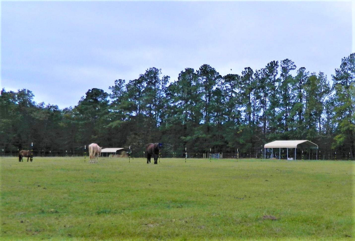 None Homes For Sale - 1044 Eagle Harbor, Summerville, SC - 13