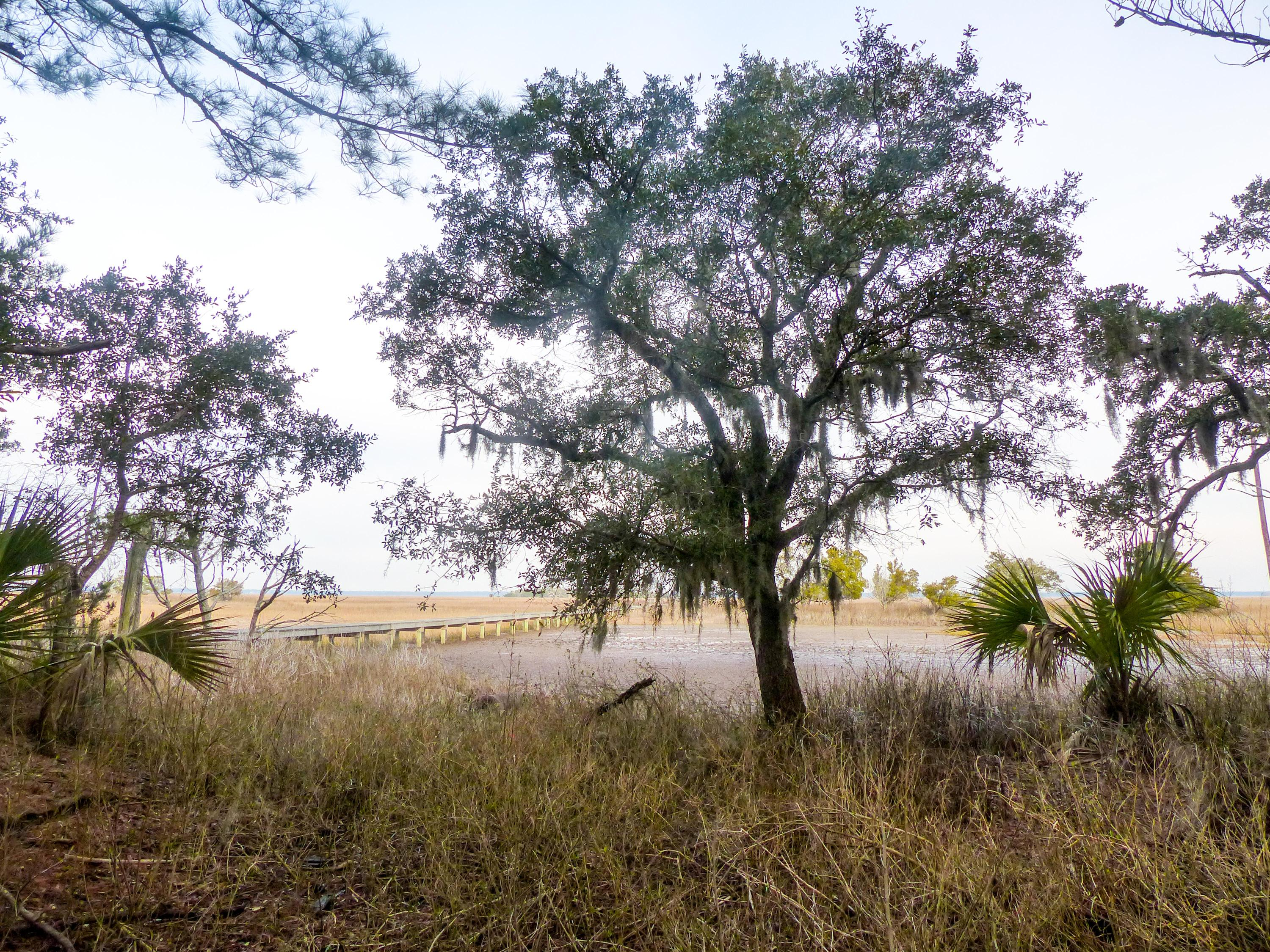 Dewees Island Lots For Sale - 310 Old House, Dewees Island, SC - 1