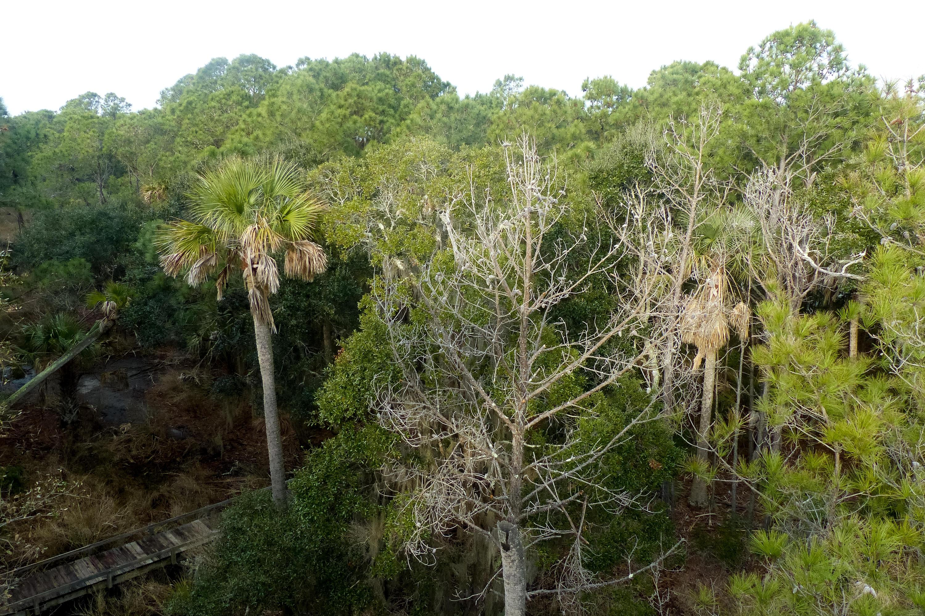 Dewees Island Lots For Sale - 310 Old House, Dewees Island, SC - 0