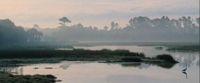 Briars Creek Homes For Sale - 4249 Wild Turkey, Johns Island, SC - 73