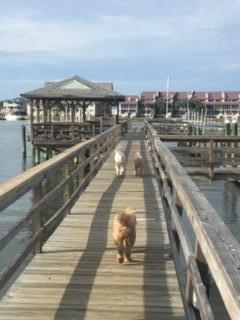Waters Edge Homes For Sale - 111 2nd, Folly Beach, SC - 19
