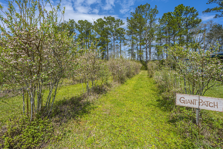 Gapway Plantation Homes For Sale - 9760 Randall, McClellanville, SC - 17