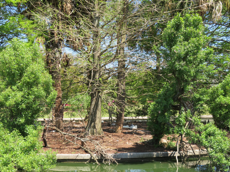 Wagener Terrace Homes For Sale - 58 Saint Margaret, Charleston, SC - 34