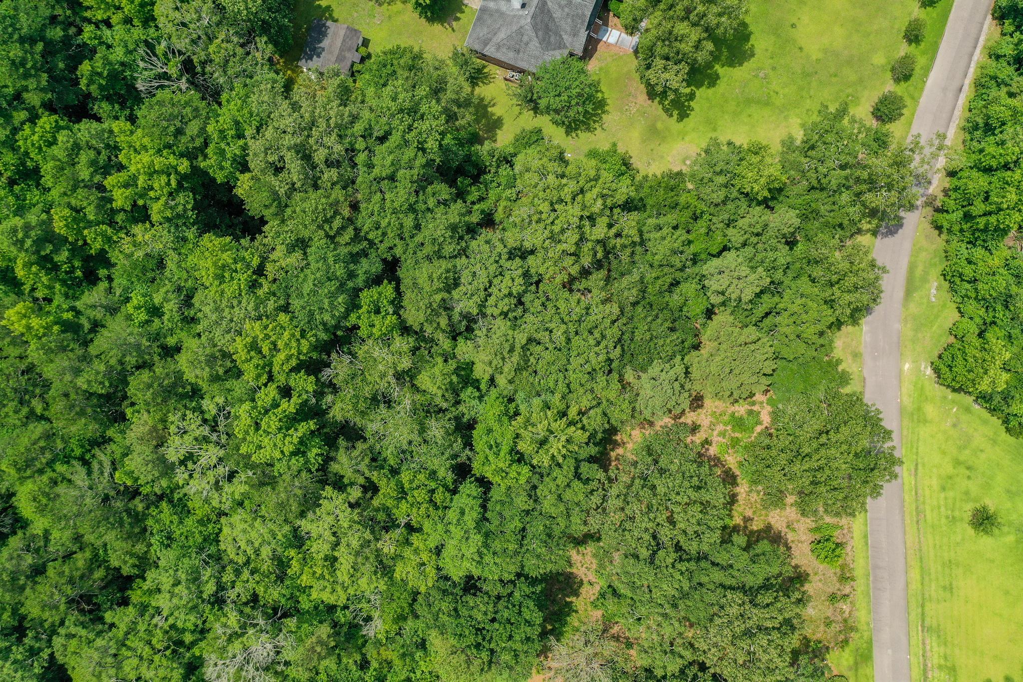 Boyle Plantation Homes For Sale - 126 Boyle, Summerville, SC - 1