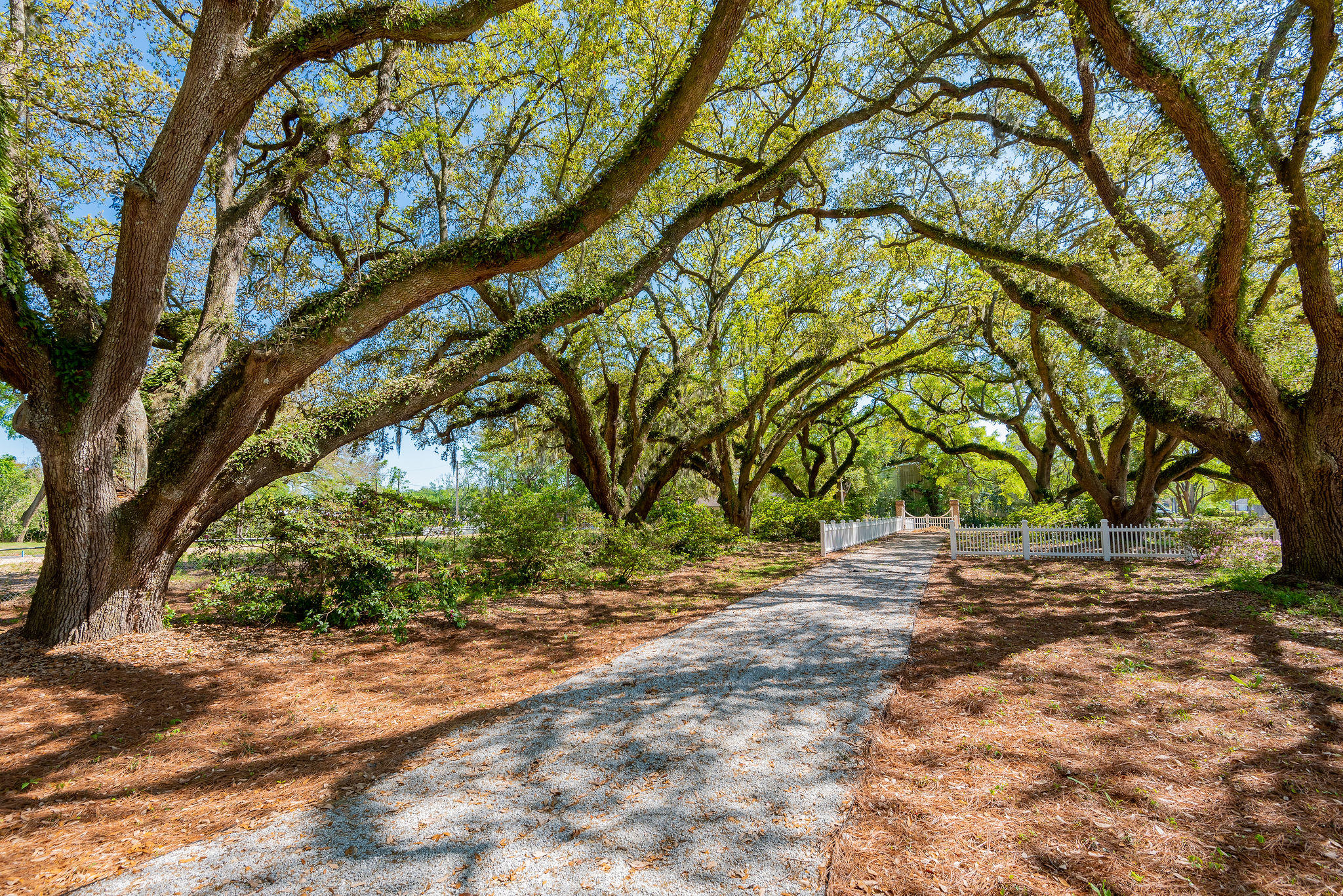 Avenue of Oaks Homes For Sale - 1027 Avenue Of Oaks, Charleston, SC - 45