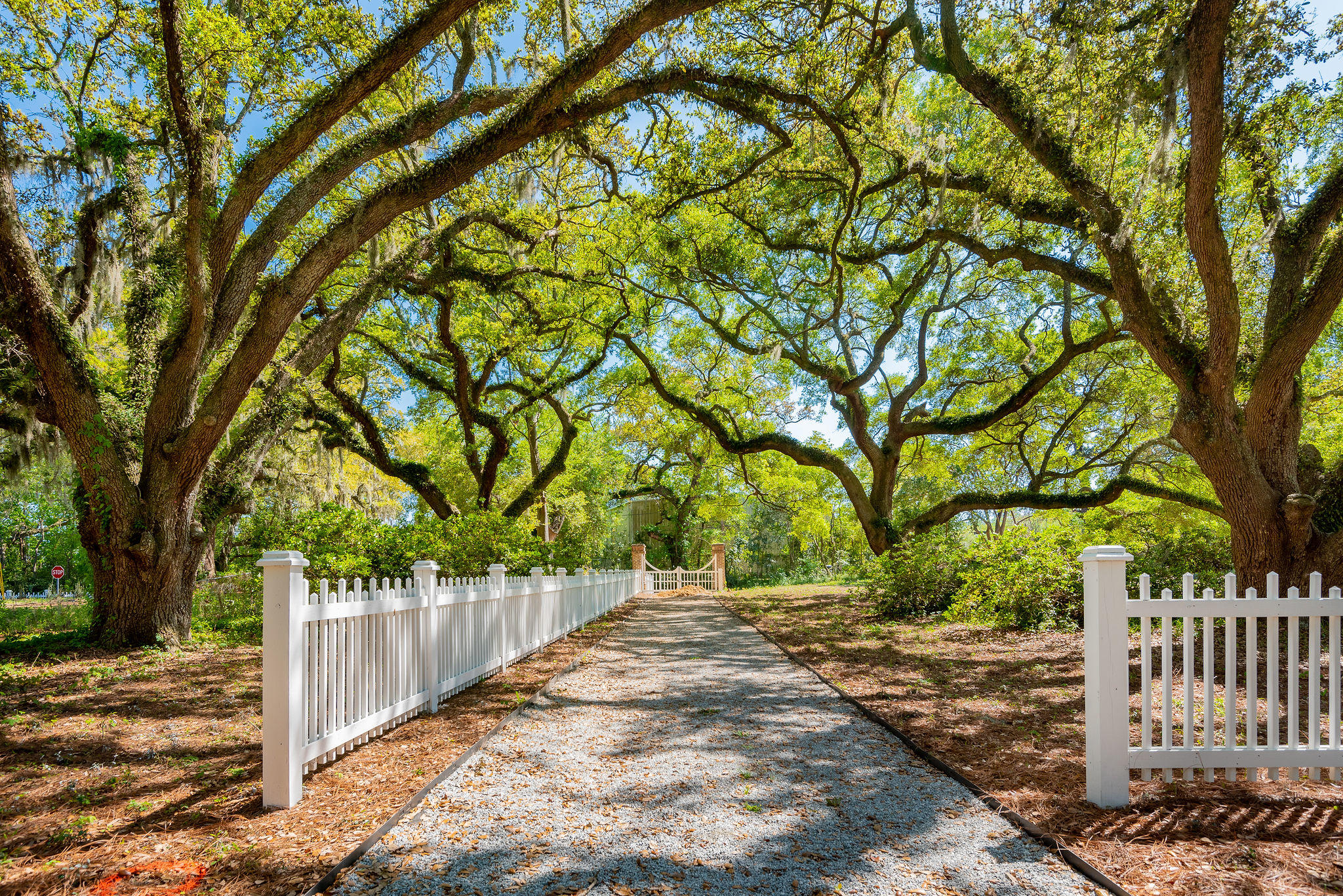 Avenue of Oaks Homes For Sale - 1027 Avenue Of Oaks, Charleston, SC - 44