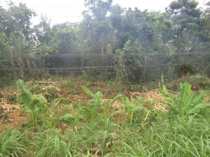 Terreno En Venta En Venecia, Matina, Costa Rica, CR RAH: 16-712