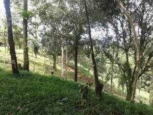 Terreno En Ventaen San Ramon, Alajuela, Costa Rica, CR RAH: 17-139