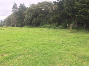 Terreno En Ventaen Sabana, Poas, Costa Rica, CR RAH: 17-741