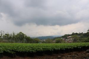 Terreno En Ventaen Alajuela, Alajuela, Costa Rica, CR RAH: 17-1018