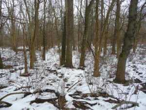 Land for Sale at New Guilford New Guilford Frazeysburg, Ohio 43822 United States