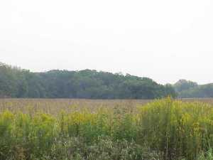 Land for Sale at State Route 104 State Route 104 Commercial Point, Ohio 43116 United States
