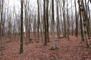 Land for Sale at State Route 681 Albany, Ohio 45710 United States