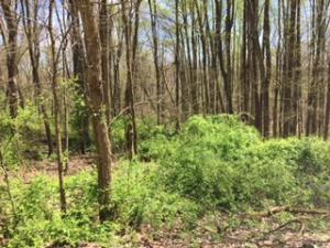Land for Sale at Pomo & Papago Lane Pomo & Papago Lane Bremen, Ohio 43107 United States