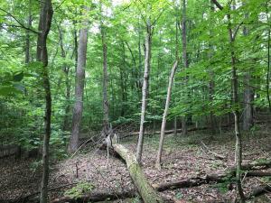 土地 为 销售 在 1998 Blackfoot 1998 Blackfoot Bremen, 俄亥俄州 43107 美国