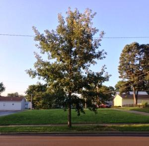 Land for Sale at 126 Main Amanda, Ohio 43102 United States