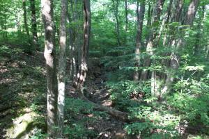 Land for Sale at Jago Valley Road Amesville, Ohio 45711 United States