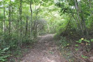 Land for Sale at State Route 683 State Route 683 McArthur, Ohio 45651 United States