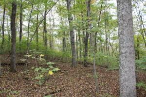 Land for Sale at Bucklick Road Bucklick Road Jackson, Ohio 45640 United States