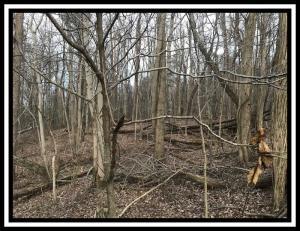 Land for Sale at 7630 McGlade School 7630 McGlade School Dresden, Ohio 43821 United States