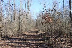 Land for Sale at Goose Creek Road Goose Creek Road McArthur, Ohio 45651 United States