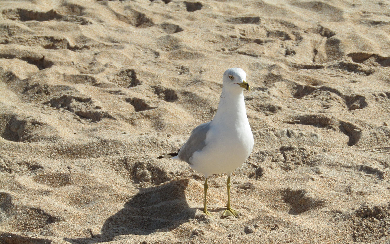 27 Palmetto Ormond Beach - 14