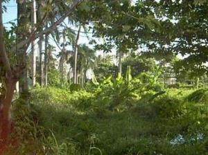 Terreno En Venta En Salvaleã³N De Higã¼Ey, Bavaro, Republica Dominicana, DO RAH: 17-421