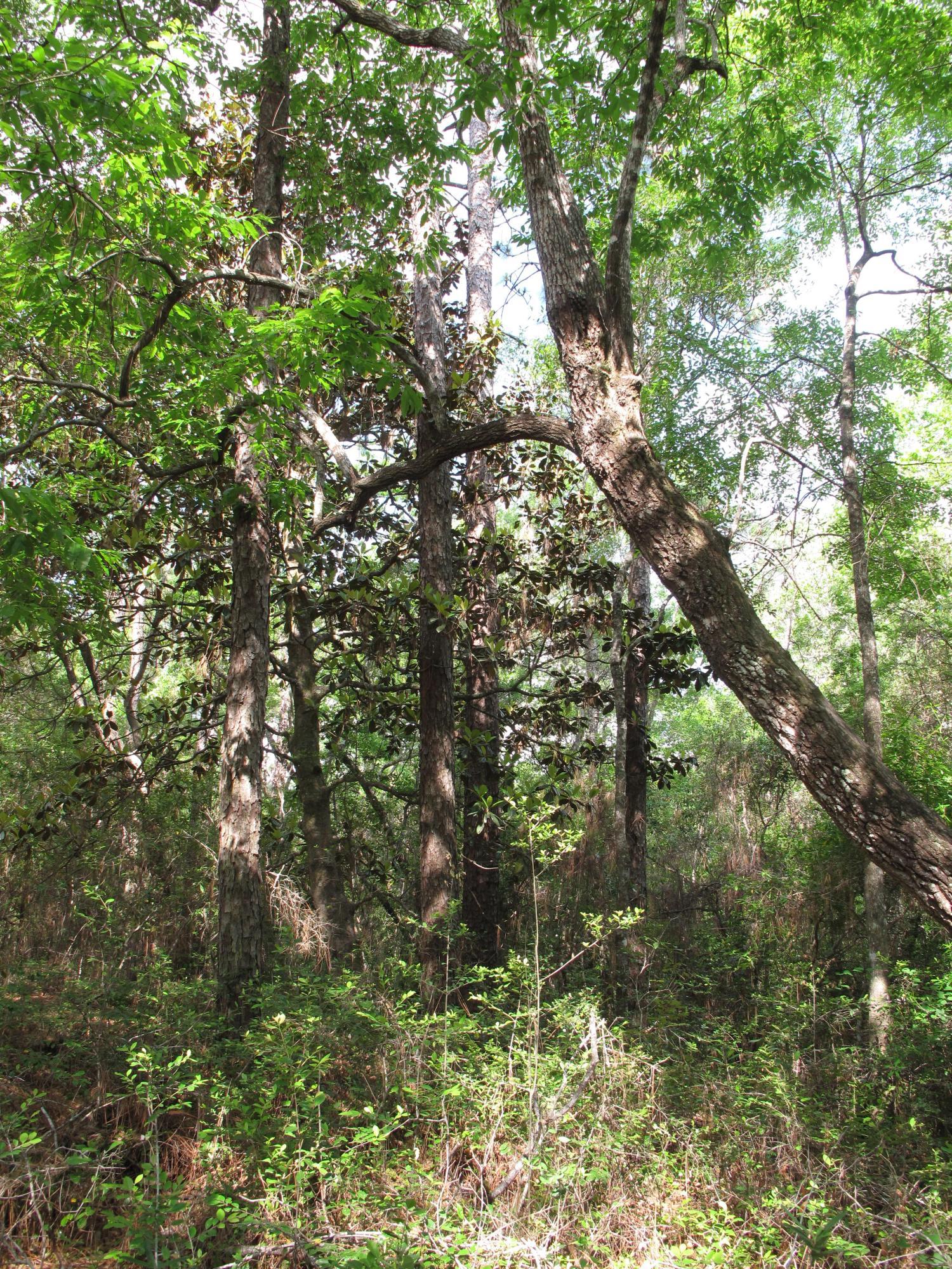 Photo of home for sale at 1204 Elderflower Dr, Niceville FL
