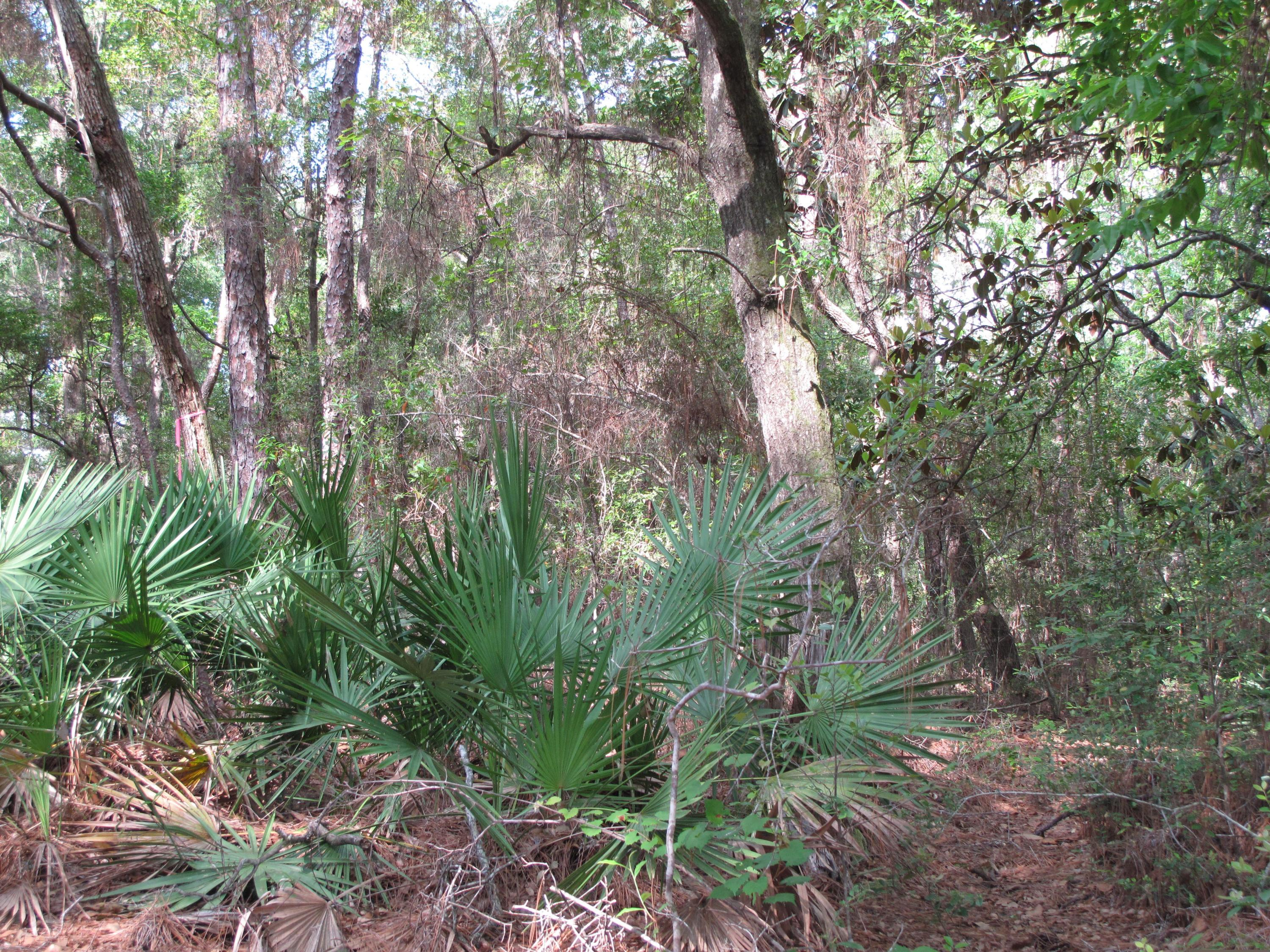 Photo of home for sale at 1502 Coriander, Niceville FL