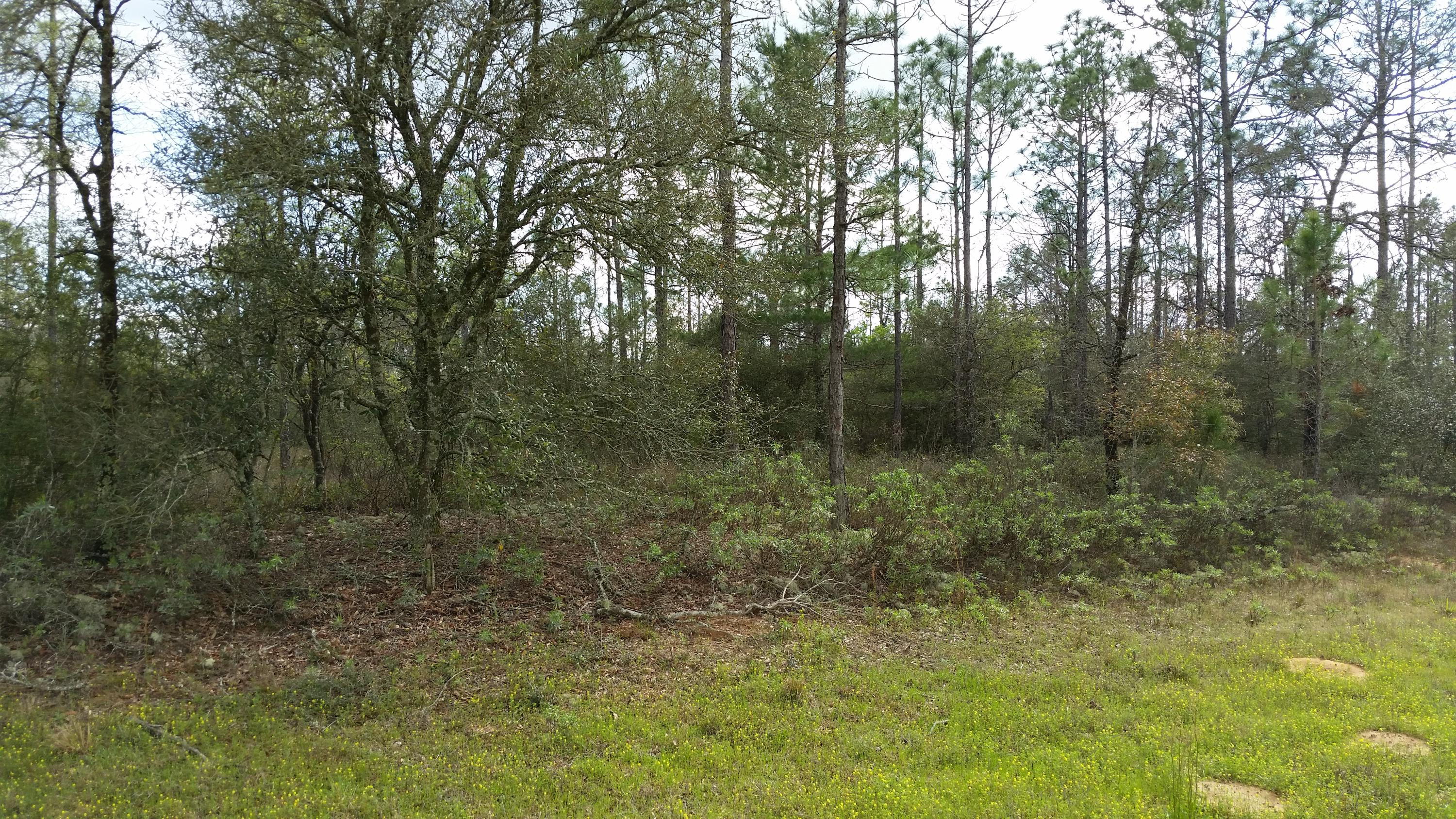 Photo of home for sale at 8.5 acres Highway 20, Youngstown FL