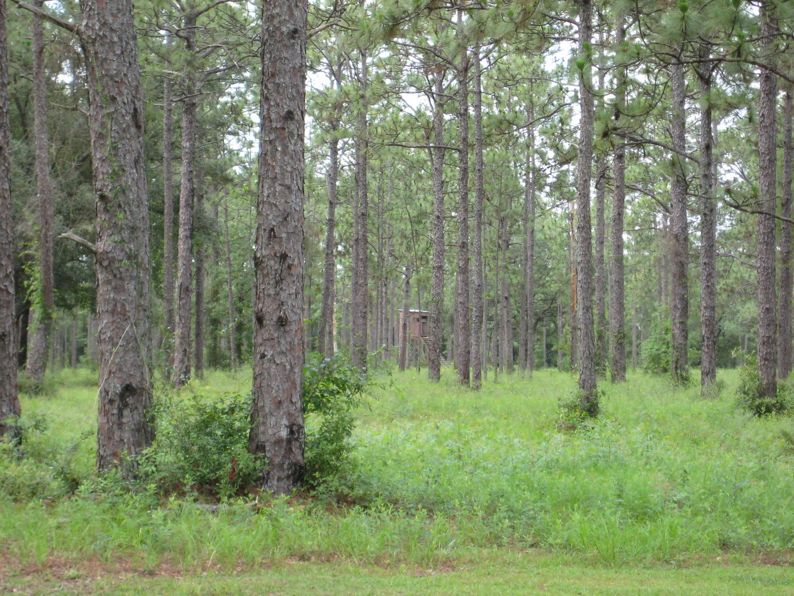 Photo of home for sale at 658 Highway 90, Holt FL