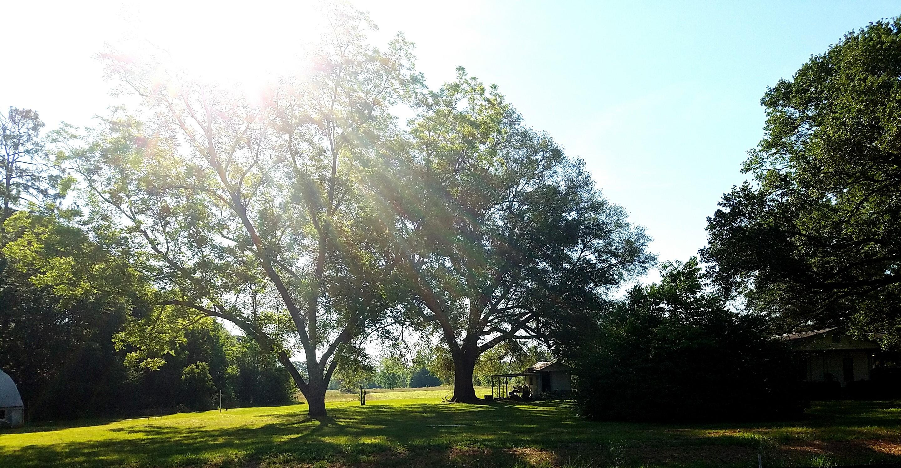Photo of home for sale at 5771 Hwy 85, Crestview FL