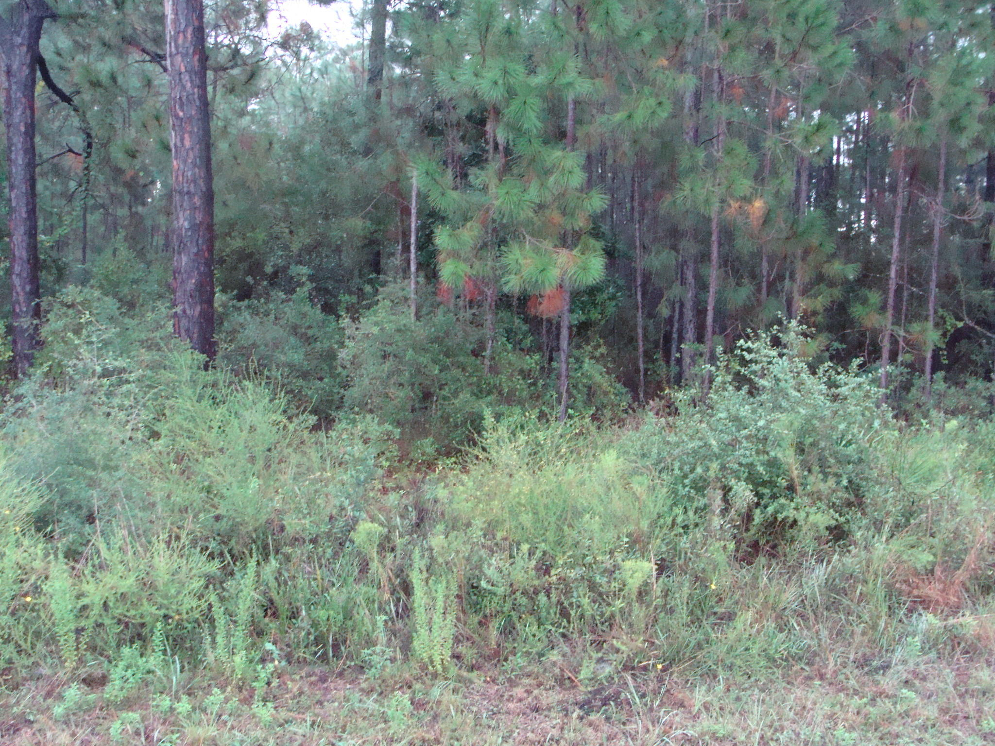 Photo of home for sale at 1954 Edgewood, Navarre FL