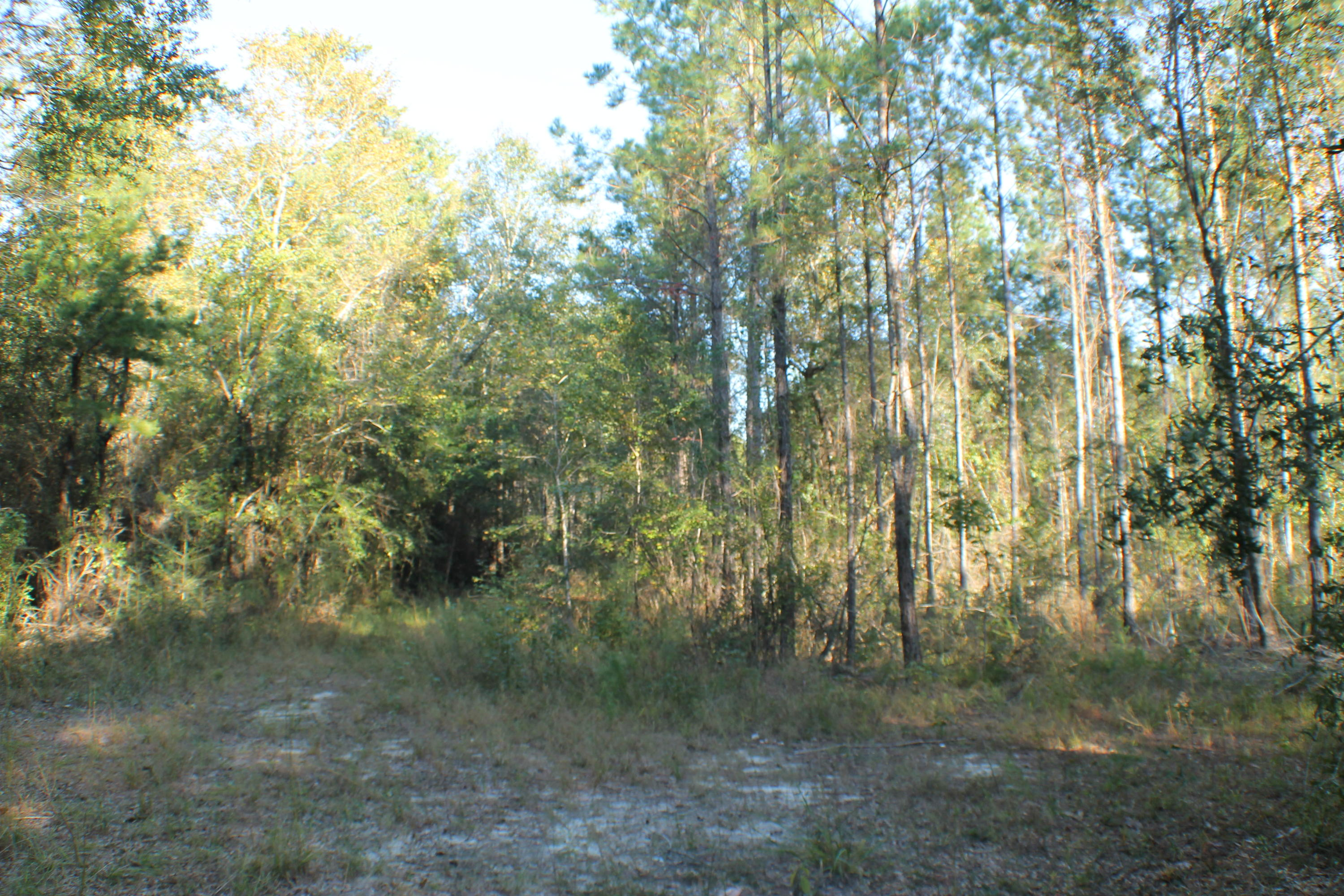 Photo of home for sale at 740.43 AC Dogwood, Crestview FL