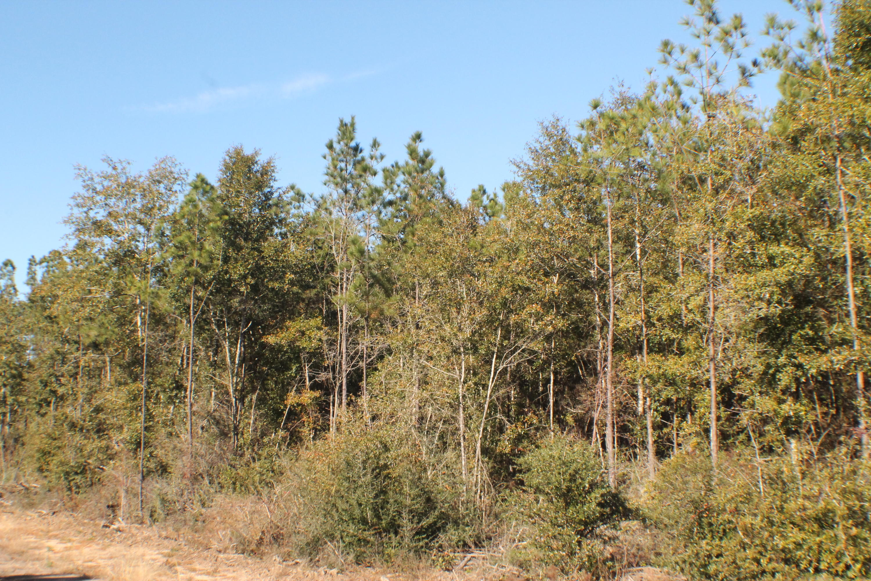 Lot 6 Forest Hills Drive