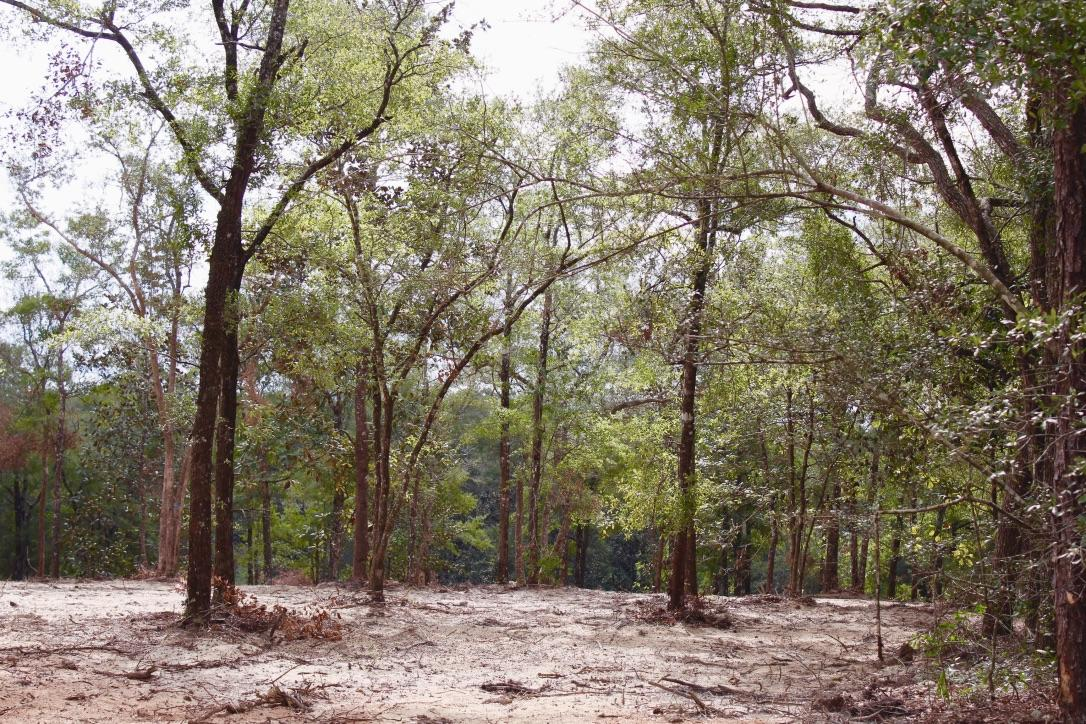 Photo of home for sale at 1AC Lot E9 Wildwood Lakes, Defuniak Springs FL
