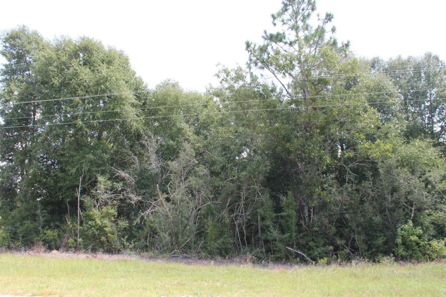 Photo of home for sale at 10.79 AC Wilkerson Bluff, Holt FL