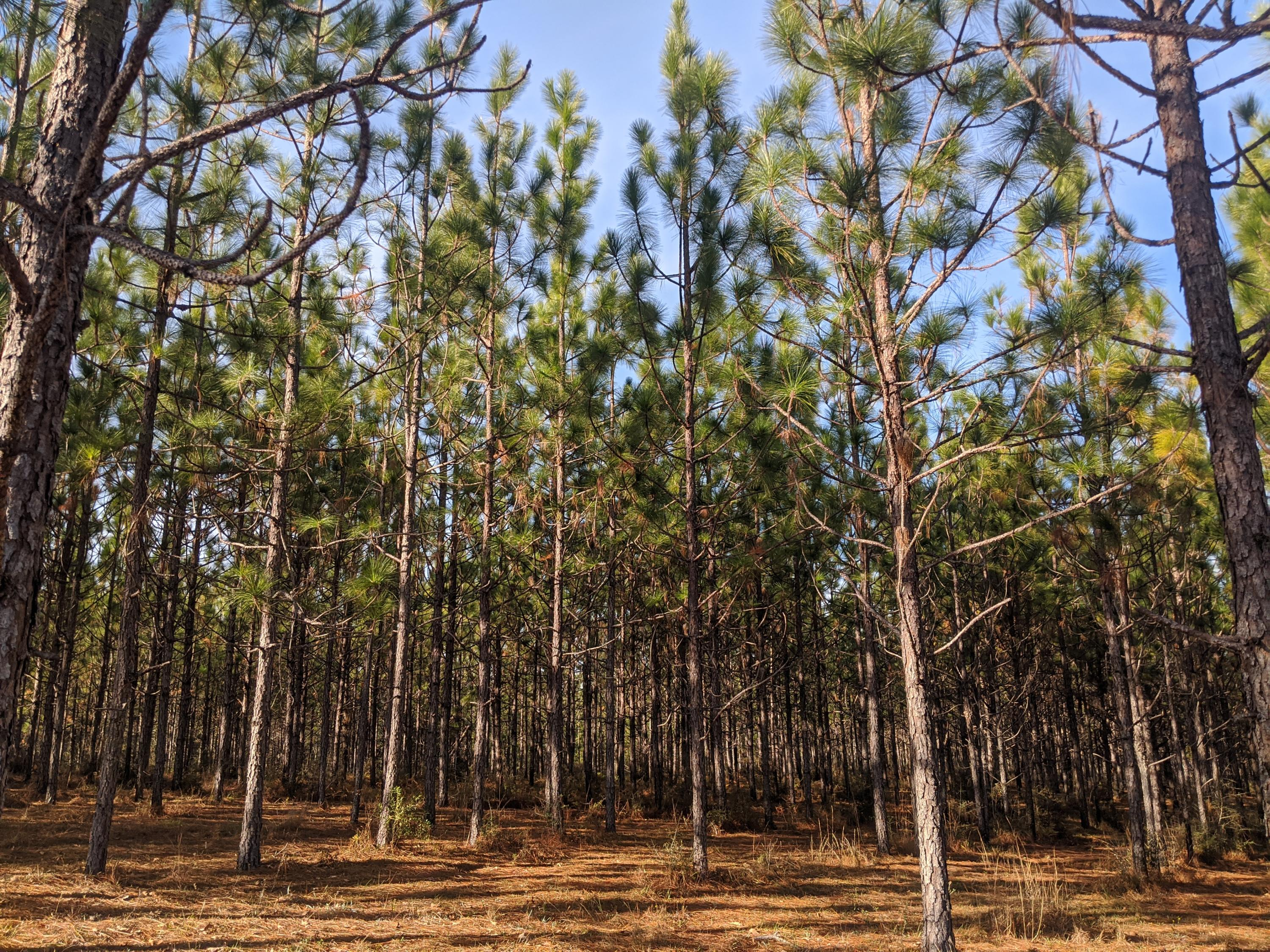 Great piece of property! 40 acres in ever growing Defuniak Springs. Close to the airport. Seller is